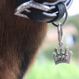 geitje maxima 'koningin' van de kinderboerderij van buitengoed de gaard