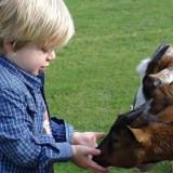 levi voert de geitjes bij buitengoed de gaard