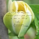 alexandra alphenaar tekst in magnolia buitengoed de gaard