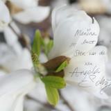 angela schijf lieve tekst voor menina in bloesem ster-magnolia