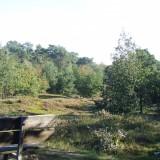 beegderheide bos maasgouw foto vvv midden-limburg