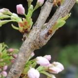 bloei op springen in huub stapel boom bij buitengoed de gaard