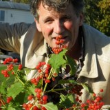 gé reinders plant viburnum in weiland bij mammaloewagen buitengoed de gaard