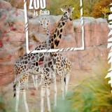gaiazoo-giraffen-zoo-is-gaia