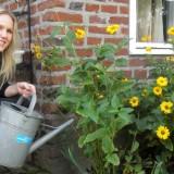 hadewych minis plant rett-zonnebloemen-mini's voor de NRSV bij buitengoed de gaard