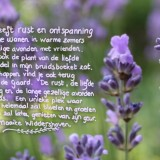 lieve tekst van maaike widdershoven voor haar lavendel bij buitengoed de gaard