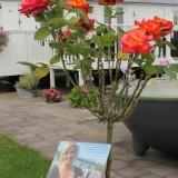 lone van roosendaal roos bij mammaloewagen buitengoed de gaard