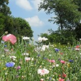 prachtige veldboeket tuin bij openluchtmuseum eynderhoof