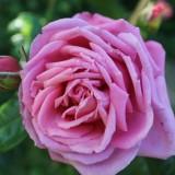 roos geplant bij buitengoed de gaard door elise schaap en wouter de jong