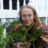 sytske van der ster plant een mammaloe hortensia bij de mammaloewagen bij buitengoed de gaard limburg