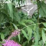 tekst leo blokhuis voor zijn  vlinderstuik bij buitengoed de gaard