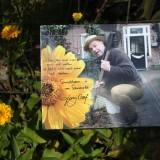 tony neef sonnebloem'langs het tuinpad van mijn vader' bloeit elk jaar prachtig bij buitengoed de gaard