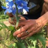 viggo waas plant zijn cruiff of pipo ridderspoor bij buitengoed de gaard pipowagen mammaloewagen