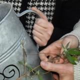 vlinderstruik ricky koole en leo blokhuis orchard of fame bij buitengoed de gaard