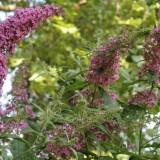vlinderstuik ricky koole en leo blokhuis bij buitengoed de gaard