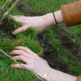 de piano-minnende handen van elske dewall planten STER-magnolia