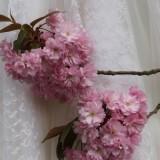 lente huwelijksreis of huwelijksjubileum   bij buitengoed de gaard