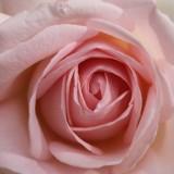 roos aspects of love buitengoed de gaard heythuysen