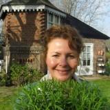 lavendel, liefdevol, van bruidsboeket tot rett meisjes geplant door maaike widdershoven bij buitengoed de gaard